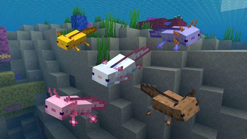 All axolotl colors in Minecraft (Image via Gamepur)