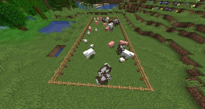 Animal mobs (Image via Minecraft Wiki)