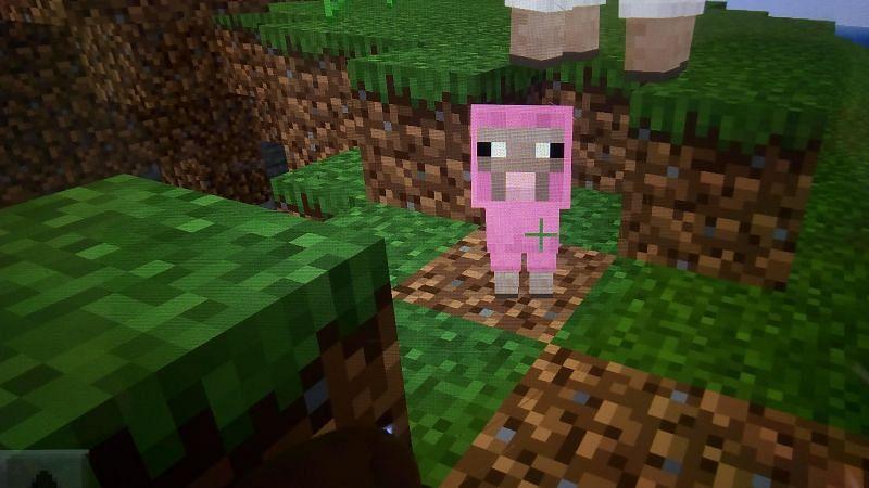 Pink baby sheep (Image via Reddit)