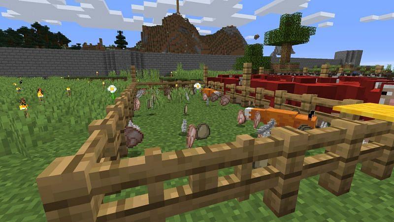 Poulets tués par un renard (Image via Reddit)