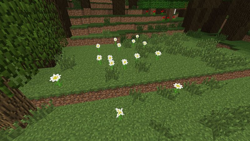 Oxeye Daisies. Image via Minecraft PC Wiki