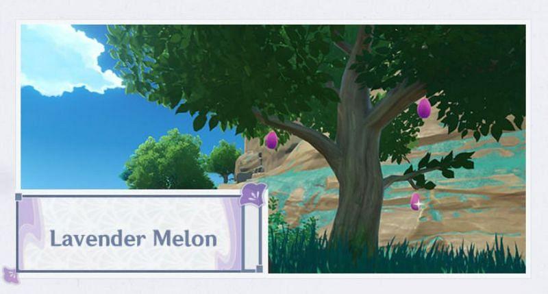Lavender Melon in Genshin Impact 2.0 (Image via Mihoyo)