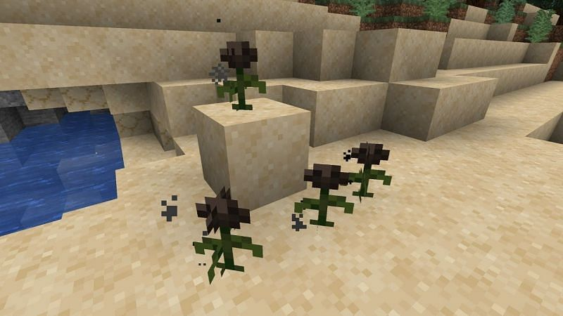Wither Rose. Image via YouTube