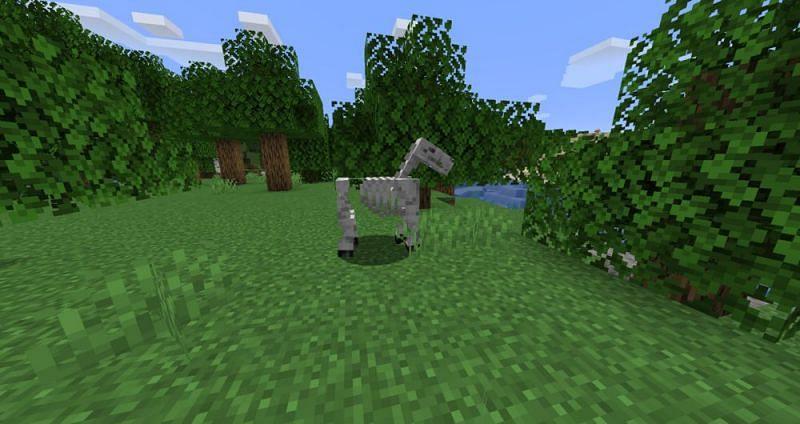 Imagen vía Minecraft Wiki