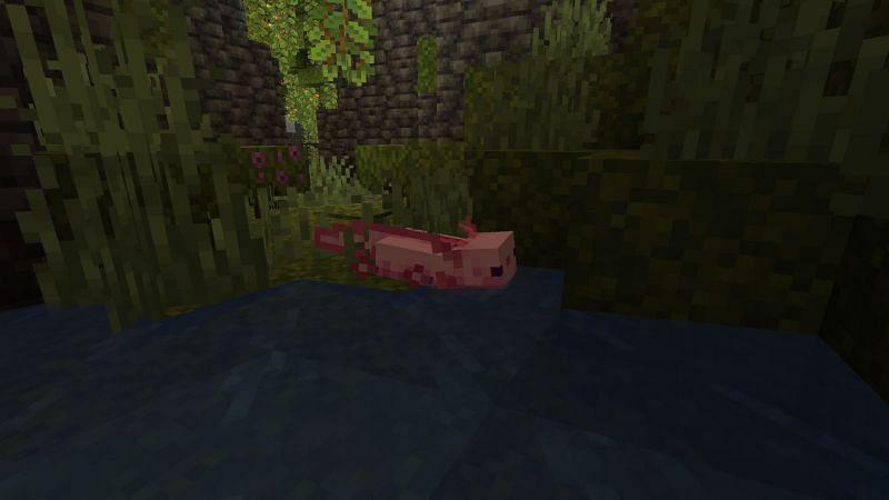 Axolotl in lush cave (Image via Minecraft)