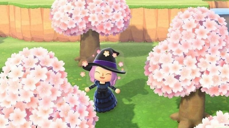 Cherry blossom trees are arguably the best-looking trees available in Animal Crossing. Image via Nintendo