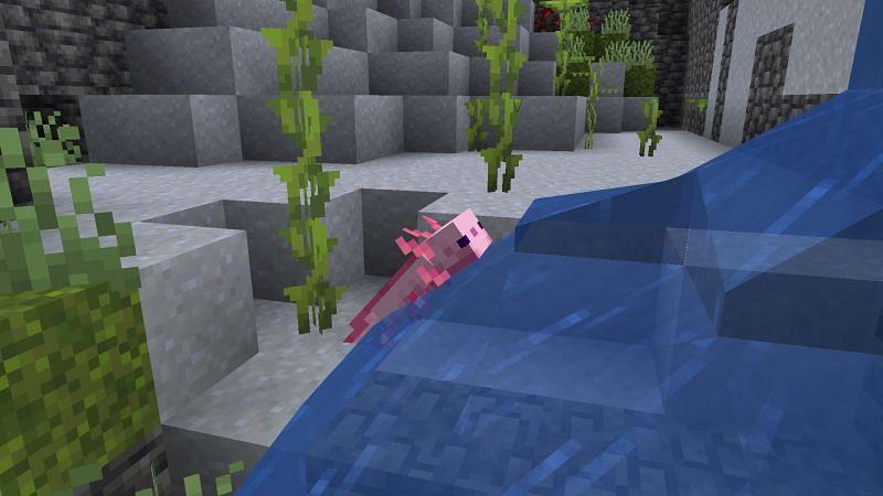 Axolotl in una grotta lussureggiante (Immagine tramite Minecraft)
