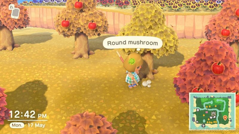 Mushrooms are available in November (Image via Animal Crossing world)