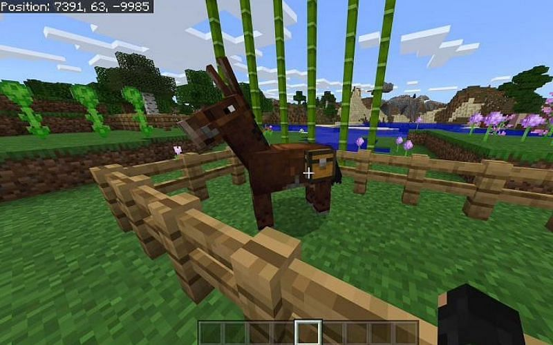 An image of a player looking at a Minecraft mule (Image via Minecraft)
