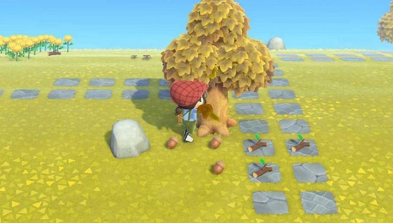 Noix dans Animal Crossing: New Horizons (Image via Game8)