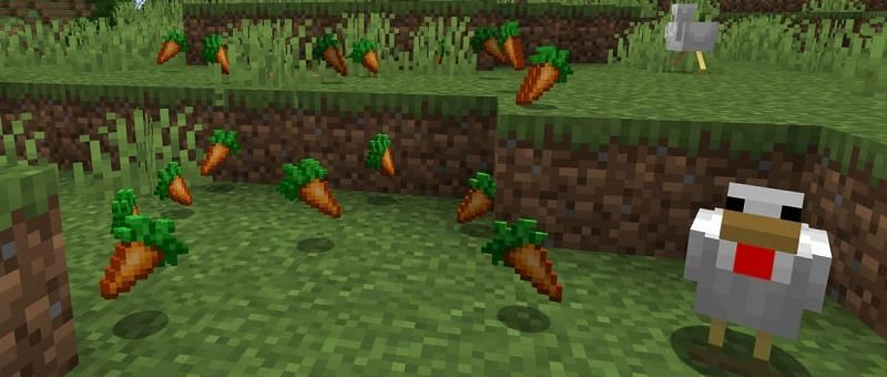 Carrots in Minecraft provide a great level of saturation (Image via Minecraft.net)