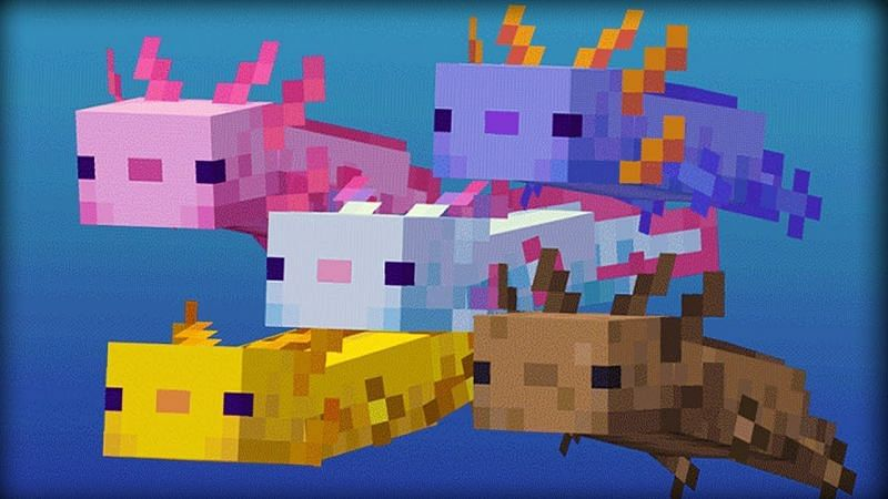 Axolotls can provide players Regeneration as well as removing their Mining Fatigue (Image via Mojang)