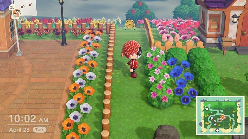 Tea Olive Bushes start spawning in September (Image via Nintendo)