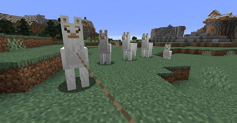 Llamas in Minecraft (Image via Minecraft)