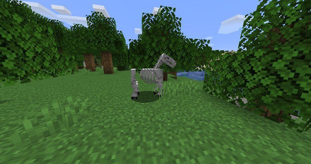The skeleton horse (Image via Minecraft Wiki)